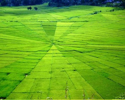 Cancar – Spider Web Rice Fields